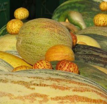 Beschrijving van variëteiten van meloenen met namen, welke variëteiten zijn