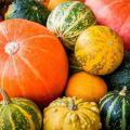 Kuvaus koristekurpitsalajikkeista, sen viljelystä ja käytöstä