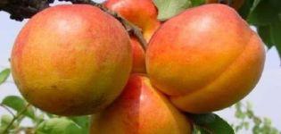 Descripción de la variedad de albaricoque Goldrich y características de cultivo.