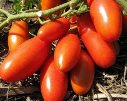 Características y descripción de la variedad de tomate Gulliver, su rendimiento.