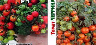Descrierea varietății de tomate Cerrinano metodele sale de cultivare