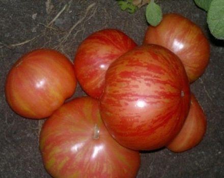Descrierea varietății de roșii viță de vie vintage, caracteristicile și productivitatea acesteia