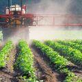 Rikkakasvien torjunta-aineiden käyttöohjeet ja vaikutusspektrit, lajikkeet ja parhaiden kuvaus