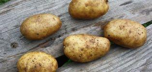 Beschrijving van aardappelras Geluk, de kenmerken en aanbevelingen voor de teelt