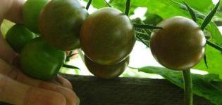 Características y descripción de la variedad de tomate Dikovinka, su rendimiento.