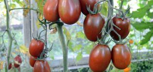 Caracteristicile și descrierea soiului de roșii Black Moor, randament și cultivare