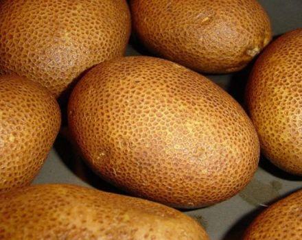 Opis sorte krompira Kiwi, njegove karakteristike i prinos
