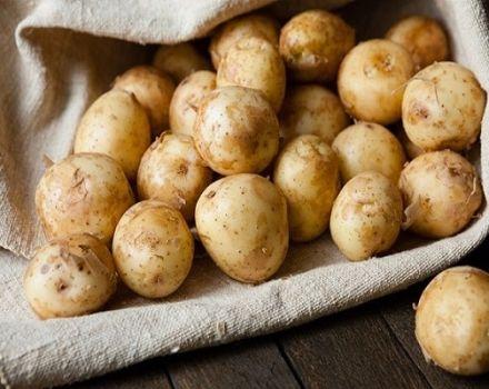 Beneficiile și dăunările cartofilor tineri, cum să germineze și când să plantezi