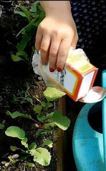 Κανόνες για τη χρήση σόδας κατά των ζιζανίων στον κήπο και προφυλάξεις