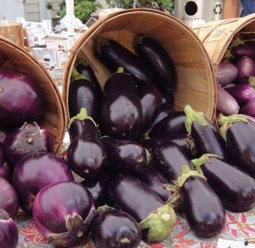 Cele mai populare și mai productive soiuri de vinete pentru cultivare în câmp deschis și regulile pentru alegerea semințelor