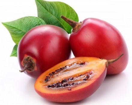 Tomarillo paradajka, ako jesť a pestovať