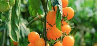 Περιγραφή της ποικιλίας ντομάτας Κίτρινο καπάκι, τα χαρακτηριστικά και η απόδοση