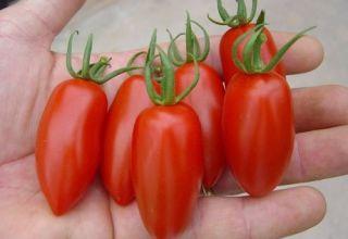 Características y descripción de la variedad de tomate Raketa, su rendimiento y cultivo
