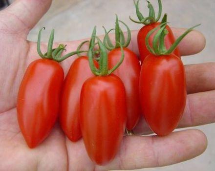 A Raketa paradicsomfajta jellemzői és leírása, termése és termesztése