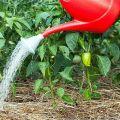 ¿Cómo alimentar la pimienta con yodo y se puede utilizar como fertilizante?