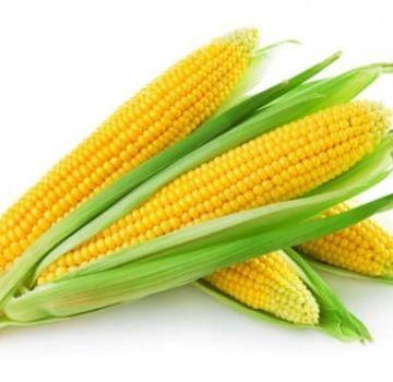 TOP 50 parhaimman sokerimaissilajikkeen kuvaus ja viljely
