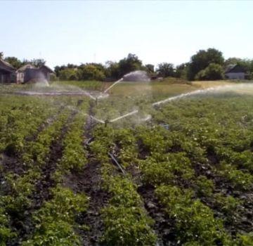 Načasovanie, kedy sa majú zalievať zemiaky na dobrú úrodu