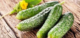 Descripción de las mejores y productivas variedades de pepinos para invernaderos de policarbonato.