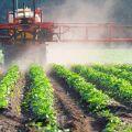 Útmutatások a Balerina herbicid használatához és a fogyasztási arányok