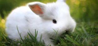Descripción y características de los conejos de la raza Hermelin y las reglas para su mantenimiento.