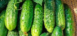 A Trilogi uborkafajta leírása, a termesztés és az ápolás jellemzői