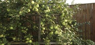Descripción de la variedad de manzana de Moscú más tarde, características de la variedad y frutas, el momento de la floración y la maduración.