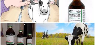 Instrucciones de uso de Nitox 200 para bovinos, dosis y contraindicaciones