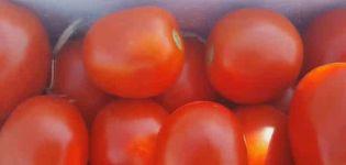 A Chibli paradicsom hibrid változatának leírása, termesztése