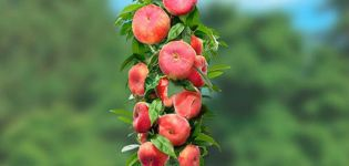 Az oszlopos őszibarack fajtáinak leírása, ültetése és gondozása, a mezőgazdasági technológia szabályai