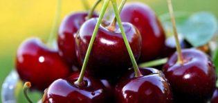 A cseresznyefajta leírása és jellemzői A bika szívét, termesztését és gondozását