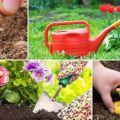 Kalendar sadnje vrtlarstva za vrtlar za srpanj 2020