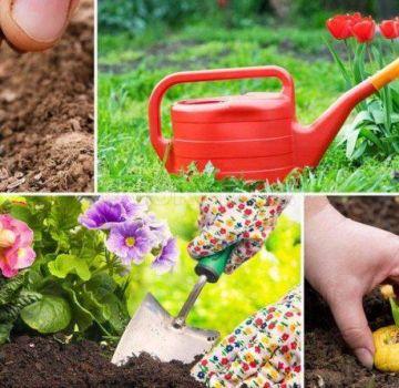 Calendarul lunar de însămânțare a grădinarului pentru 2020 iulie