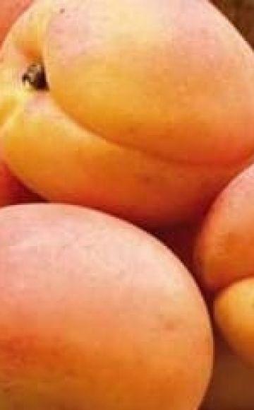 Opis a charakteristika odrôd marhúľ Hargrand, pestovanie a starostlivosť o ne