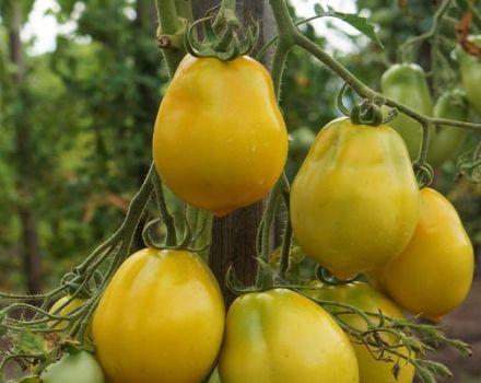 Description de la variété de tomate Anna German et de ses caractéristiques