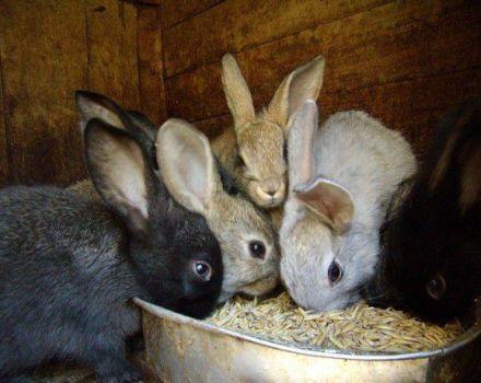 ¿Es posible dar cebada a los conejos, y con qué corrección, los beneficios y daños de los cereales?