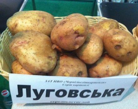 Descripción de la variedad de patata Lugovskoy, características de cultivo y rendimiento.