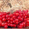 Plantar, cultivar y cuidar viburnum en campo abierto.