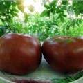 Caracteristicile și descrierea soiurilor de tomate din seria de tomate Gnome, randamentul său