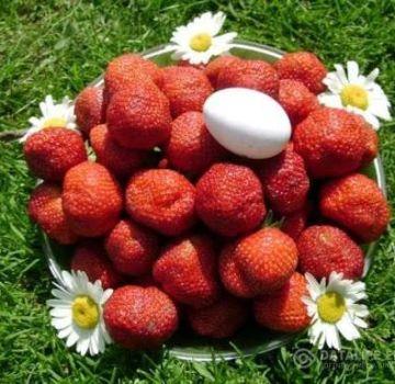Erdbeeren pflanzen, anbauen und pflegen auf freiem Feld in Sibirien und die besten Sorten