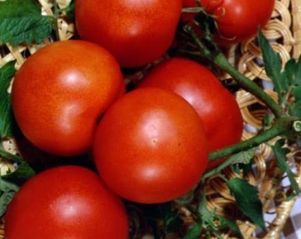 Cele mai bune soiuri de roșii pentru o seră policarbonat din regiunea Moscova