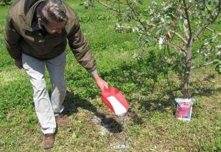 Hogyan lehet takarmányozni egy körte tavasszal, nyáron és ősszel, a megtermékenyítés szabályai és normái