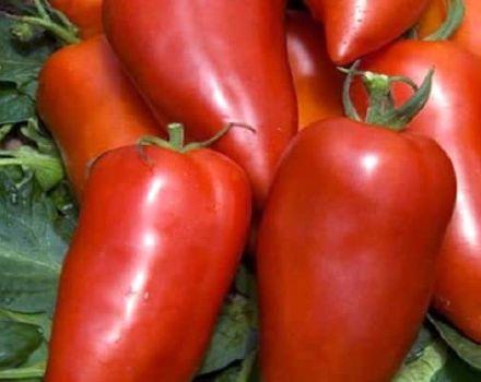 Descripción de la variedad de tomate banana Bonanza y sus características