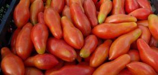 Características y descripción de la variedad de tomate Plátano naranja