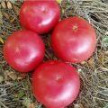 Charakteristika a opis odrody paradajok Raspberry ringing, jej výnos
