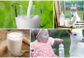 Výhody a poškodenie kozieho mlieka pre telo, chemické zloženie a spôsob výberu