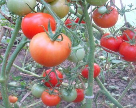 Descripción de la variedad de tomate Taimyr, sus características y características de cultivo.