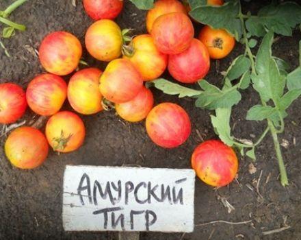 Charakteristiky a opis odrody paradajok Amur tigrov