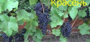 Descripción y características de la variedad de uva Krassen, historial de crianza y características de cultivo.