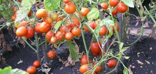 Descrierea soiului de tomate Kmicits, caracteristici de îngrijire și randament