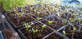 Hogyan készítsük elő a paradicsommagokat palánták ültetéséhez, feldolgozásához és áztatáshoz
